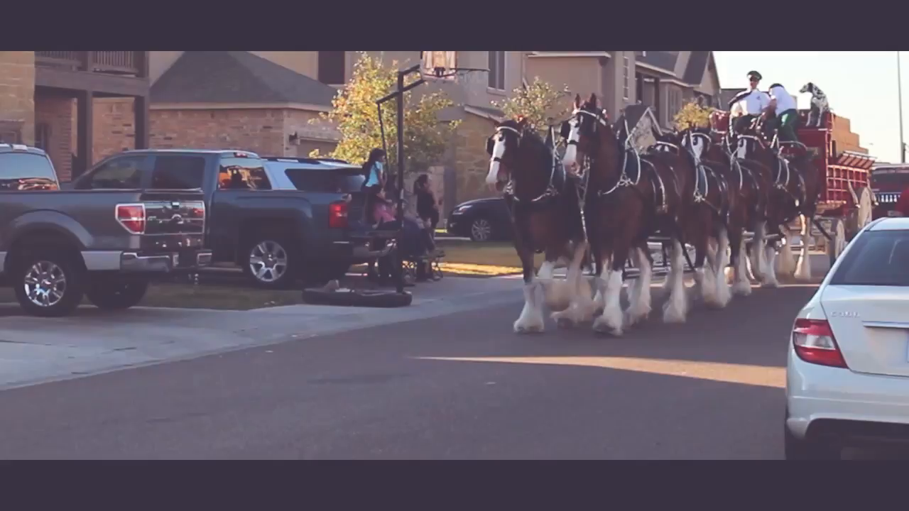 Clydesdales stock.mp4 poster