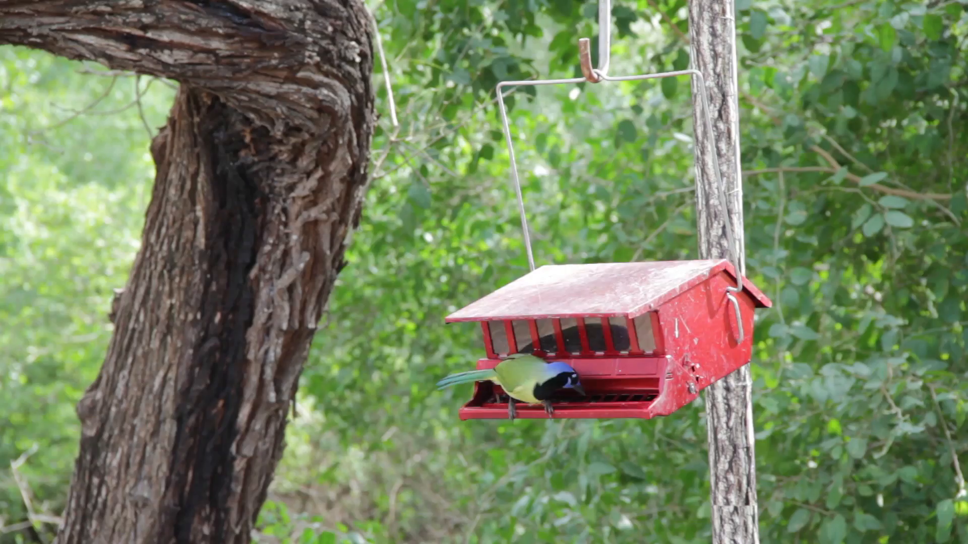 Bird feeder.mp4 poster